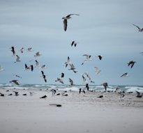 Fåglar på strand
