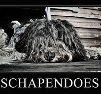 Schapendoes